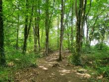 Woodland walk at Cole Wood